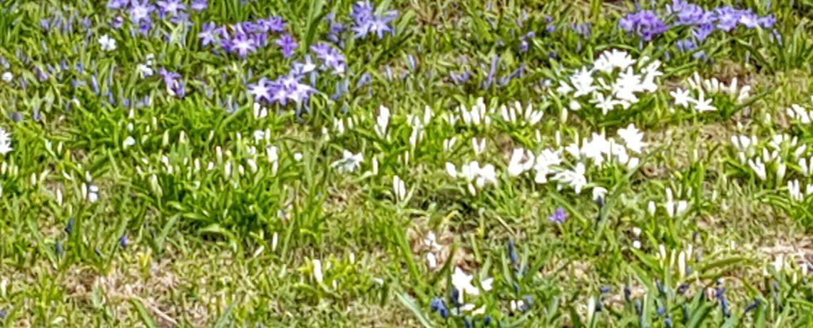 Kutsu yhdistyksen kevätkokoukseen / Invitation to Spring general meeting